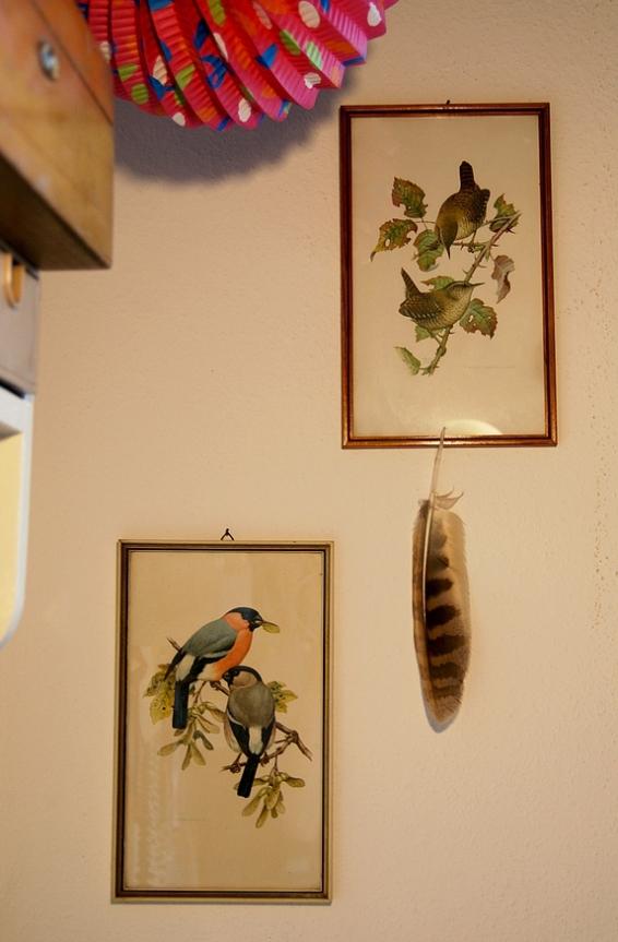 birds_franz_murr