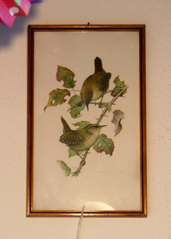 birds_franz_murr_1