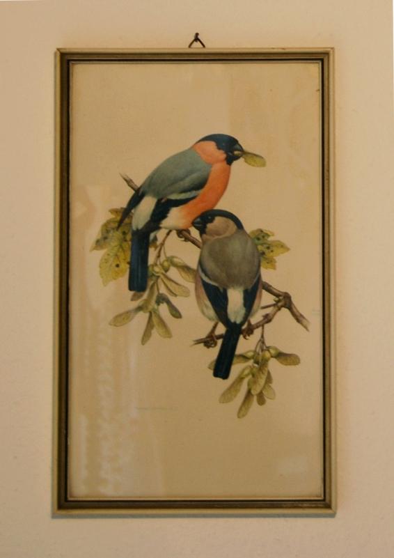 birds_franz_murr_2